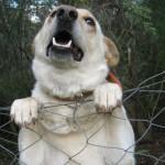 Cynophobia - dog phobia - specific phobias