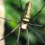 Arachnophobia - spider phobia. specific phobias.